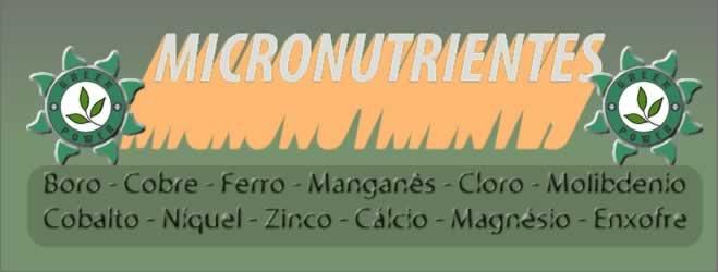micronutrientes no cultivo