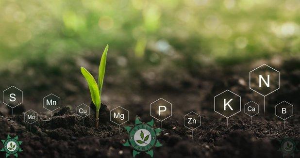 fertilização de plantas