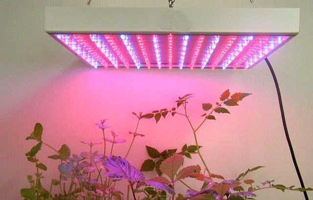 grow leds ou lâmpadas de vapor