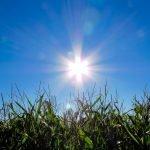 cultivo outdoor em cada estação do ano