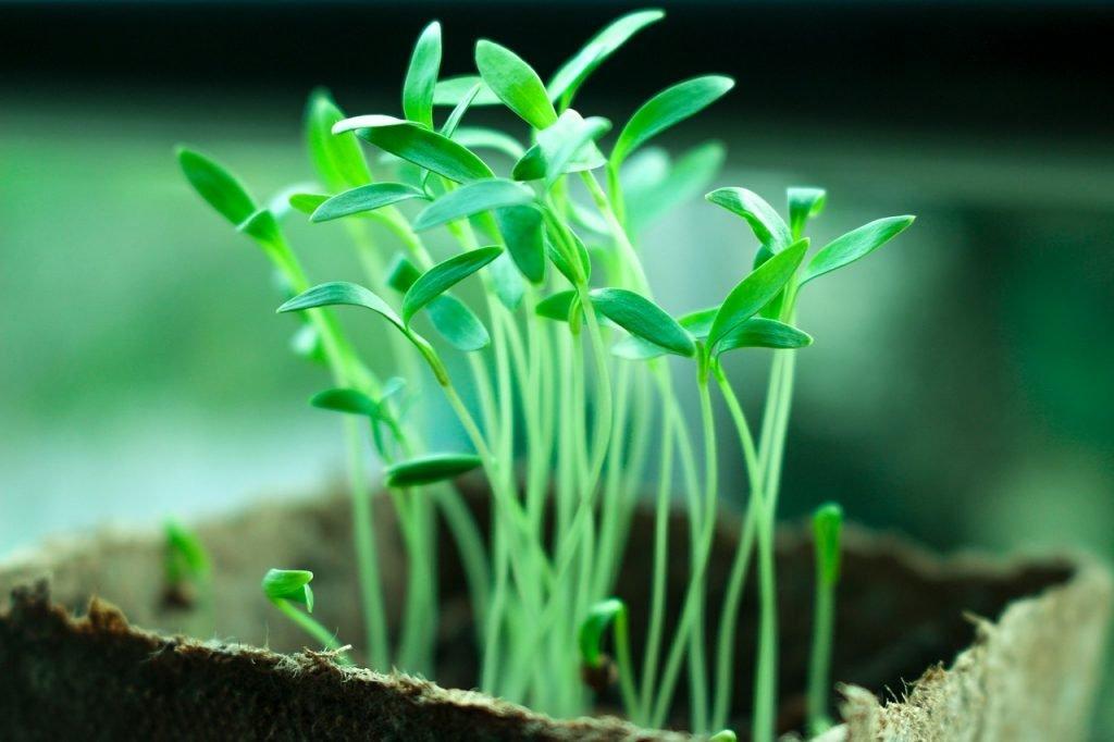 Quanto custa montar um grow