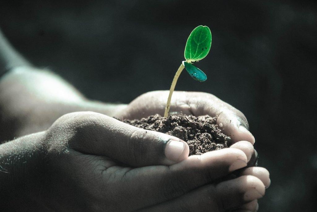 Conhecimentos básicos sobre cultivo indoor