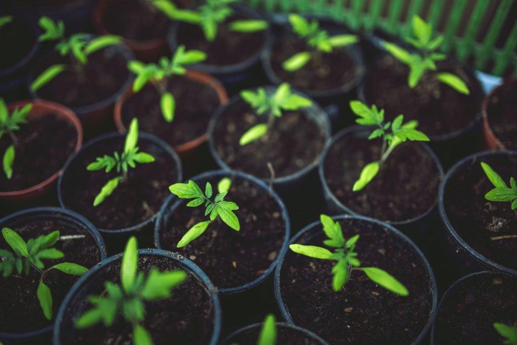 cultivo indoor para melhor