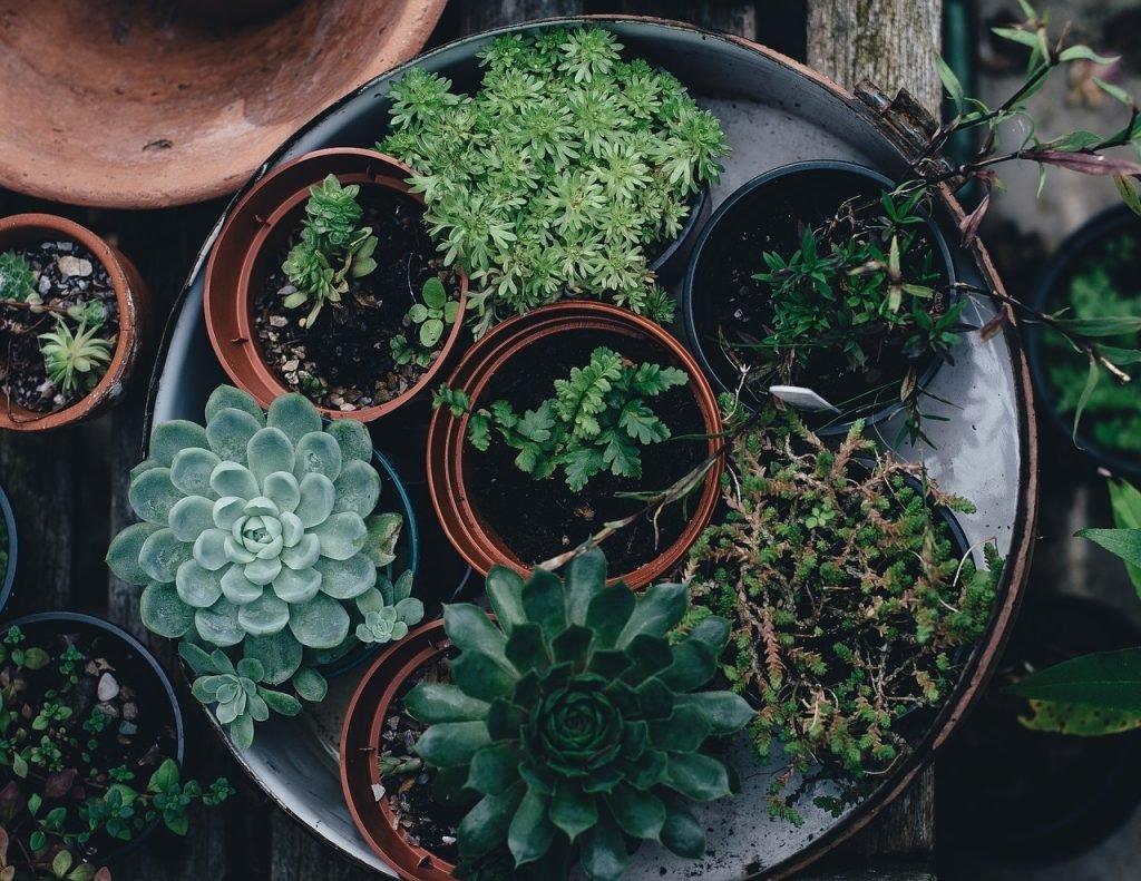 lst treino de plantas