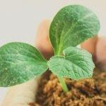 primeiro grow