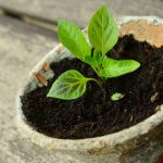 quantidade certa de fertilizante
