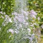 como regar planta cultivo indoor grow