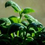 plantas mais saudáveis