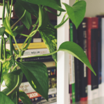 Estudo Indoor: confira as dicas da Green Power para o período de quarentena