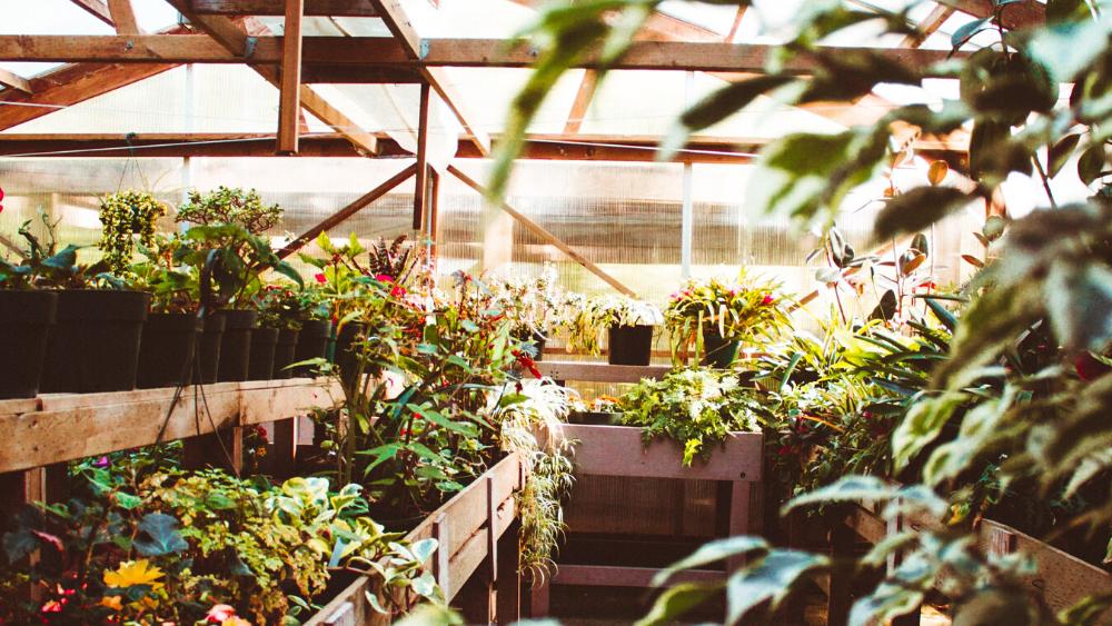 quantidade de plantas