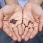 escolha das sementes