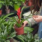 Transplante da planta: Saiba a hora certa, cuidados e dicas de sucesso
