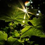 Guia de iluminação: confira boas práticas para o sucesso do seu grow