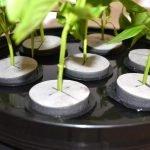 Clones de plantas e seus segredos, quais melhores galhos e datas certas para fazer clonagem?
